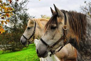 Hästlån, låna till att köpa en häst